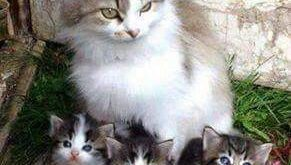 "What a lovely family picture #cats ""> #cats"