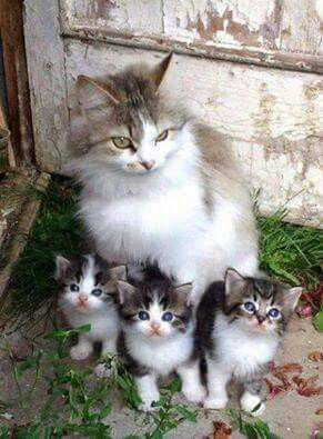 """What a lovely family picture #cats explore Pinterest""""> #cats"""