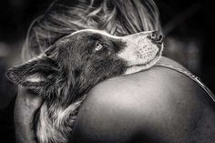 Here are a few pups Here are a few pups that love giving cuddly…