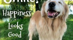 Smile! Happiness looks good on you! #quote  #quote #goldenretriever  #goldenretriever