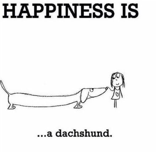 Happiness Is . . . A Dachshund