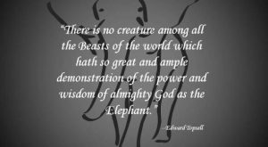 "Elephant Quotes #ivoryforelephants search Pinterest"" #ivoryforelephants #stoppoaching search Pinterest"" #stoppoaching #elephants search Pinterest"" #elephants…"
