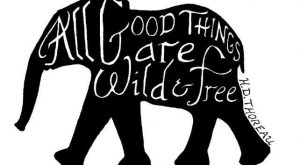 all good things are wild & free!