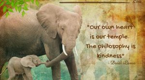 The best Elephant Quotes & Sayings in my giant Animal Quotes & Sayings library!…...