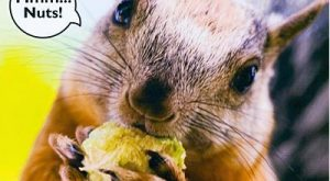 squirrel quotes and sayings | Alternate Images – Click each to view: