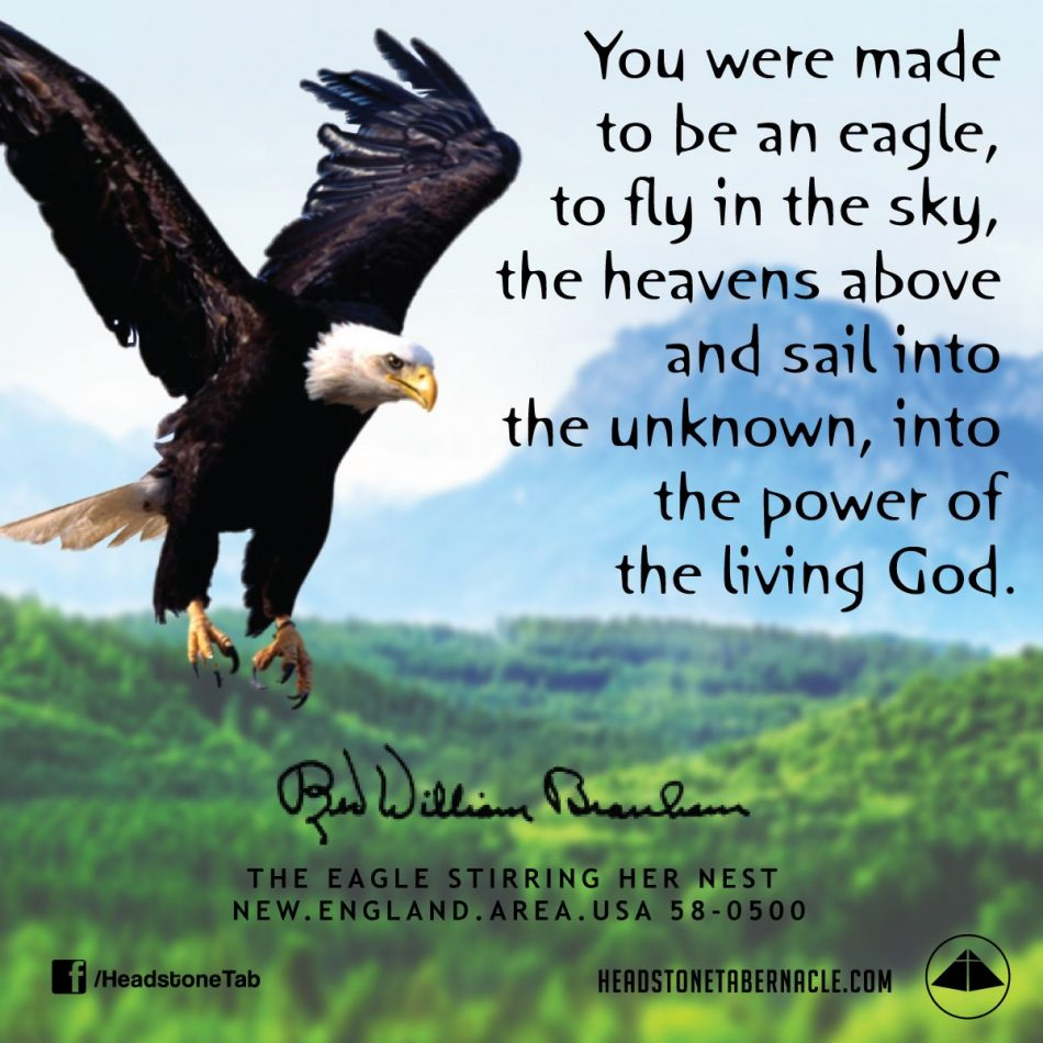 You were made to be an eagle, to fly in the sky, the heavens…