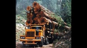 Best Logging Truck Drivers Skills| Heavy Machines | Big Trucks