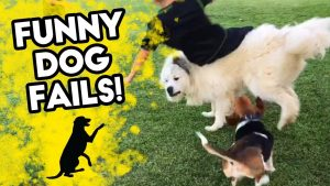 FUNNY DOG FAILS | Funniest Dog Videos on Youtube! | FB, IG, SNAPCHAT | September 2018