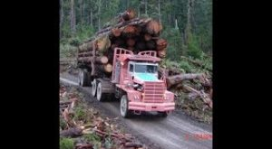 Trucks Stuck in Mud | Heavy Machines Big Trucks Logging