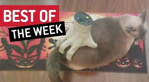 Best of the Week!   Helping Hand!