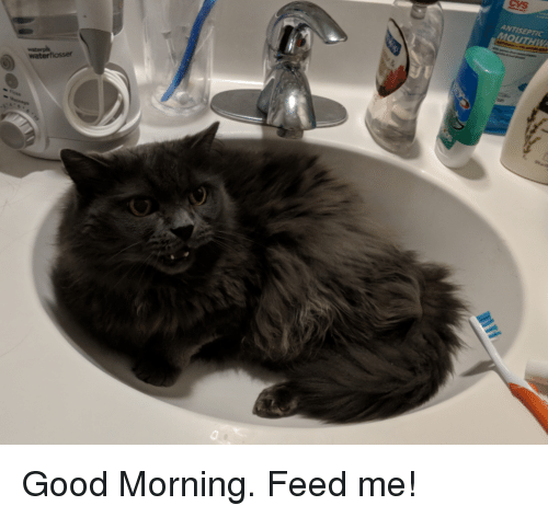 Good Morning, Good, and Feed Me: ANTISEPTIC  MO  waterflosser