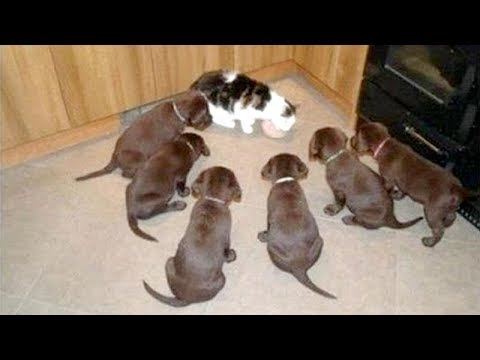 Cute FUNNY PUPPIES are the BEST ANIMALS – LAUGH NOW!