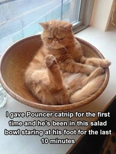 ** Pouncer must be b