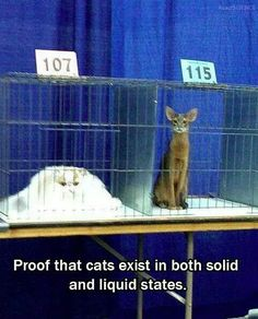 Proof that cats come