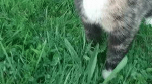 Memes, My House, and House: Found Cat Cropseyville…..38 Bailey Rd  Please spread the word. Cropseyville ny 12052   518 279-3807. The cat hides in the woods surrounding my house and comes out when I call to feed her.