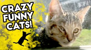8 GRAZY MOVIES + CRAZY FUNNY CATS | These are the Funniest FAILS | 2018