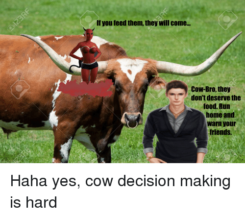 Food, Friends, and Run: If you feed them, they will come…  Cow-Bro, they  don't deserve the  food. Run  home and  warn your  friends.
