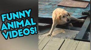 FUNNY ANIMAL VIDEOS | The Best Fails | SEPTEMBER 2018