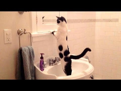 NOW is TIME TO LAUGH! – Super funny DOGS, CATS & BIRDS