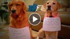 Funny Guilty Dogs Funny Dogs Reactions When Caught Guilty (Part 1) [Funny Pets]