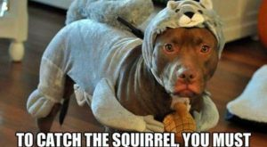 "101 best funny dog memes – ""To catch the squirrel, you must become the…"