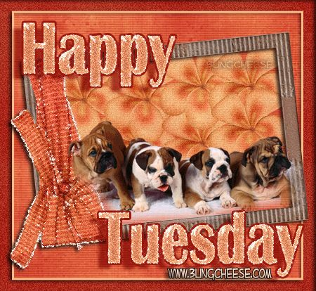 tuesday quotes and pictures | Tuesday Brown Puppies Graphics | Tuesday Brown Puppies Facebook…