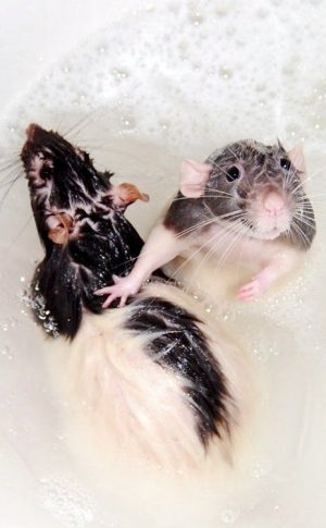 Wish my babies cooperated like this for bath