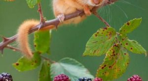 Animals that Start With D – (Dormouse) This small and cute creature belongs to…