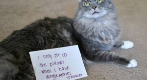 Cat shaming – hahaha I can relate