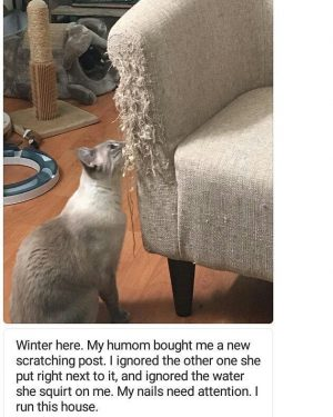 """Submitted by @seasidecali #cat """" #cat #cats """" #cats #catsofinstagram """"…"""