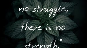 "Short Strength Quotes – ""Where there is no struggle, there is no strength"""