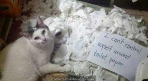 Hilarious Cat Shaming Pictures of Guilty Kitties