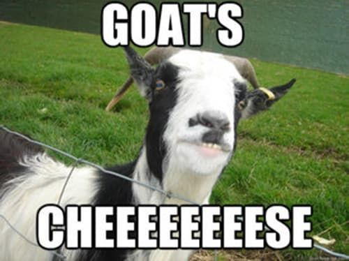 Goat Quotes For Every Occasion – Fit for Fun