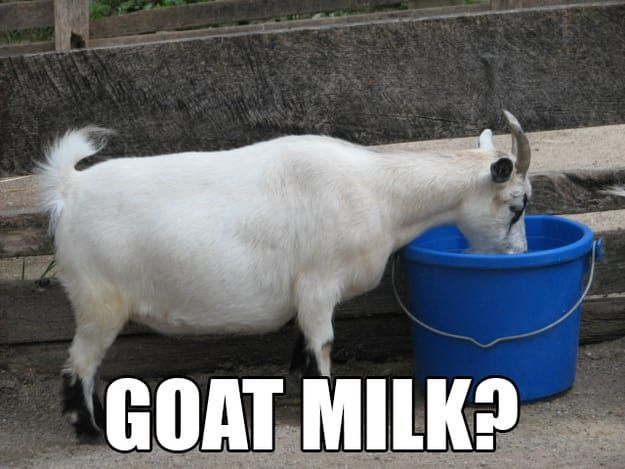 14 Goat Quotes For Every Occasion – Fit for Fun