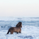 "Pictures Of Fairytale Wild Horses Living In Iceland Conditions #wild ""> #wild #horses…"