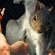 This Squirrel Doing A Super Hero Pose Sparked A Hilarious Photoshop Battle