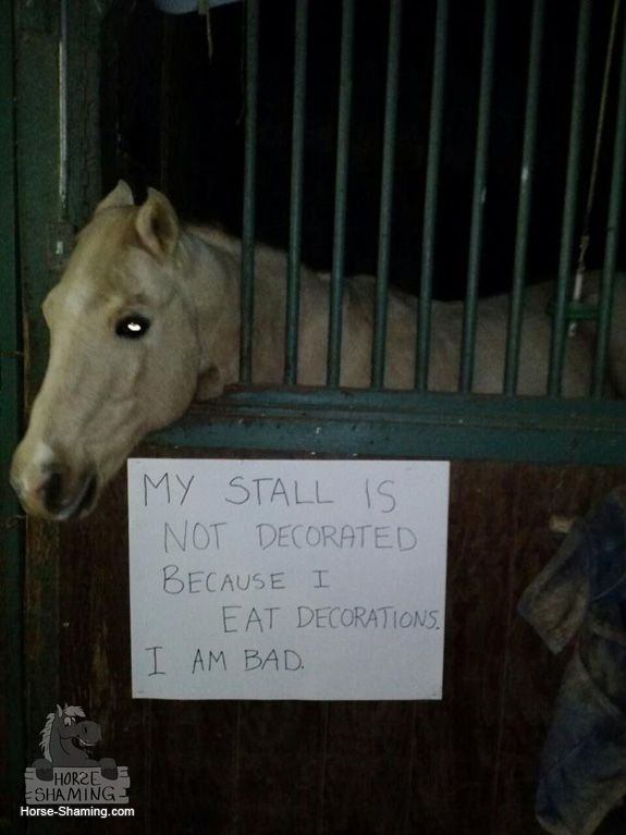 Horses Who Are Very Ashamed Of What They Did! (Not Really)