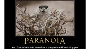 Demotivational Squirrel Poster: Paranoia Poster $ by poozybear The post Demotivational Squirrel Poster: Paranoia…