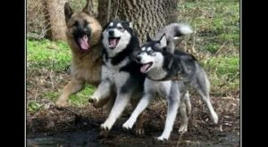 Funny Dogs with Captions   Funny pictures w/