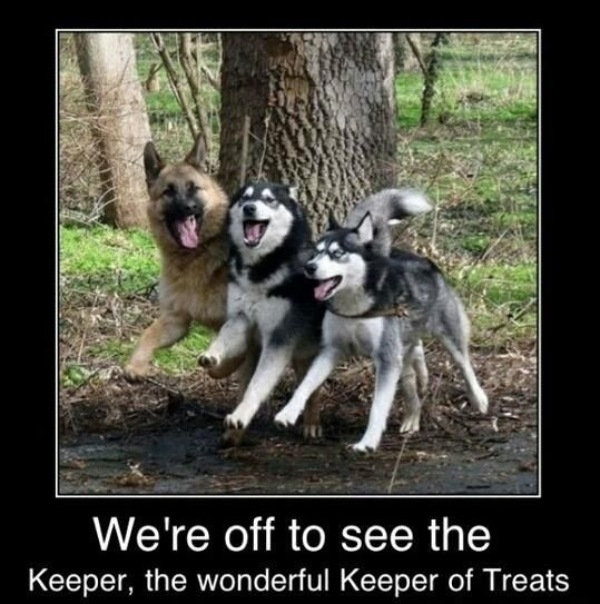 Funny Dogs with Captions | Funny pictures w/