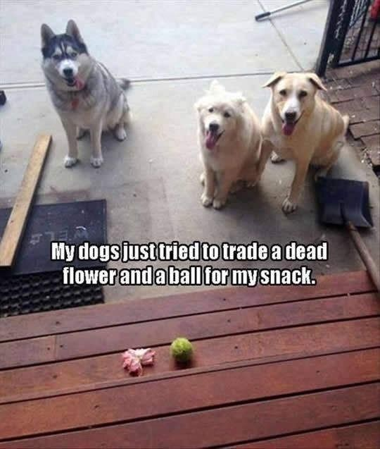 Pic pf three dogs with the caption