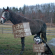 Horse That Are Not Sorry for What They've Done – Horse Shaming –