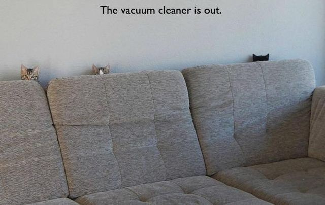 14 Memes That Are SO True For Cat People   CutesyPooh