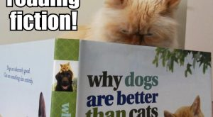 Funny Cat Pictures with Captions | … these awesome, silly, and most funny pictures…