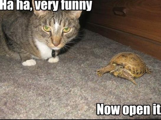 Very Funny Pictures with Captions   Very funny cats with captions pictures 2