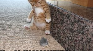 Really Funny Cats with Captions | Very Cool Funny Cat Pictures with Captions #KittenPictures…