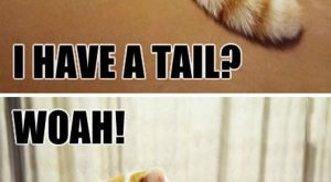 Fun Claw – Funny Cats, Funny Dogs, Funny Animals: Funny Animal Pictures With Captions…