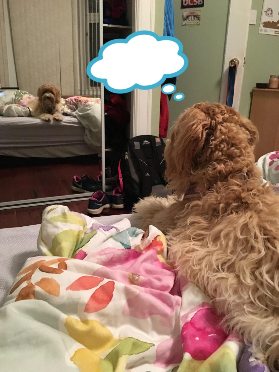 """Caption this photo of my new puppy! #dogpictures explore Pinterest""""> #dogpictures #d..."""