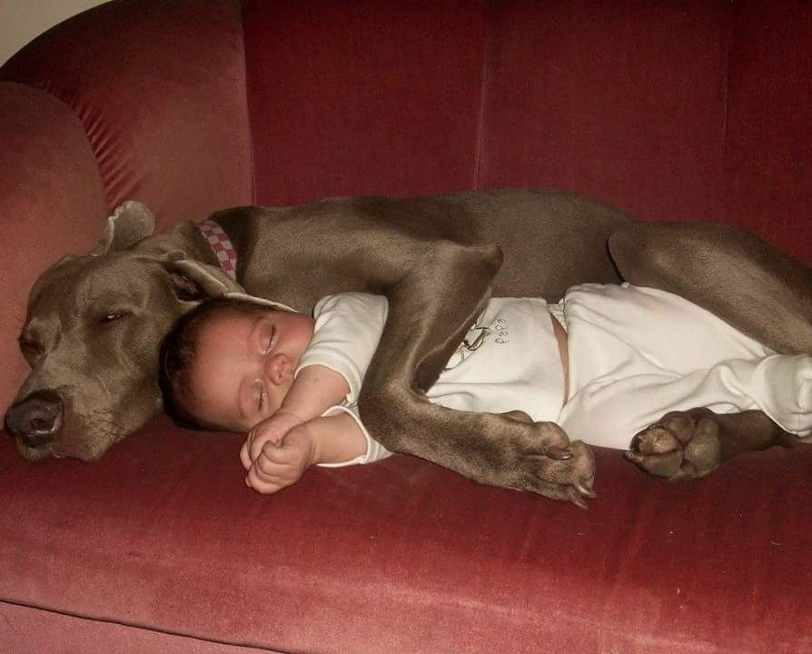 """WHAT'S A GOOD CAPTION for this ?precious and adorable moment !! #dogpictures """"…"""