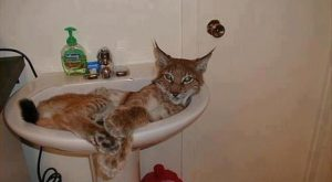 Funny Cat Pictures with Captions 30 LOL Cats: 50 Awesomely Funny Cat Photos to…